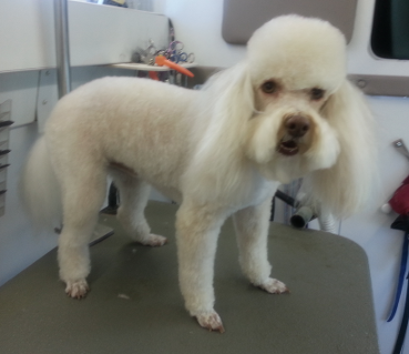 Mobile Pet Groomer las vegas